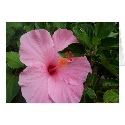 Flor azul del hibisco de Hawaii Tarjeta De Felicitación