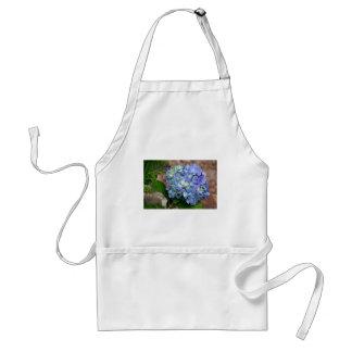 Flor azul del Hydrangea en la floración Delantal