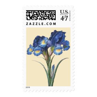 Flor azul del iris timbres postales