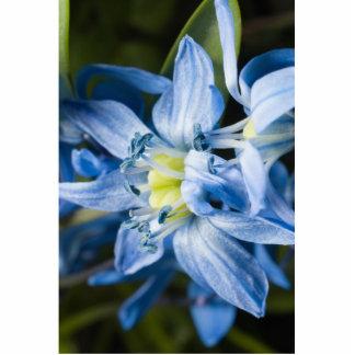 Flor azul del snowdrop de las FO de la macro Escultura Fotográfica