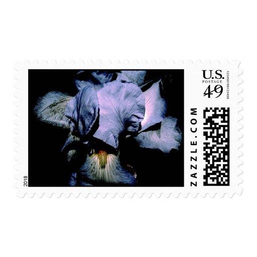 Flor azul en los sellos de la noche