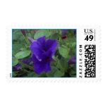flor azul envio