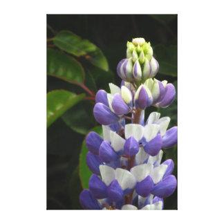 Flor azul hermosa impresión en lienzo