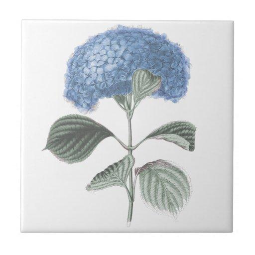 Flor azul imponente del Hydrangea Azulejo Cuadrado Pequeño
