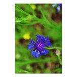 Flor azul impresion fotografica