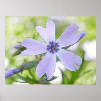 Flor azul perfecta del Phlox del arrastramiento Posters