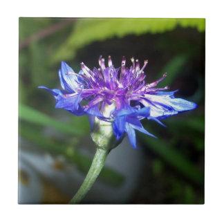Flor azul y violeta minúsculo azulejos cerámicos