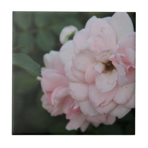 Flor Azulejo Ceramica