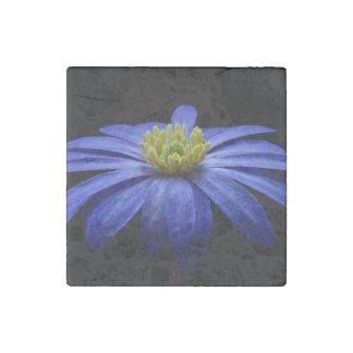 Flor balcánica azul de la anémona imán de piedra