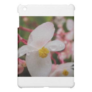 Flor blanca con descensos de rocío