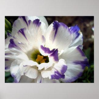 Flor blanca con el poster púrpura del ajuste
