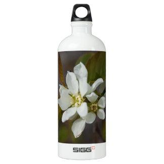 Flor blanca con la hormiga