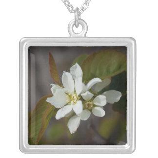 Flor blanca con la hormiga collar plateado