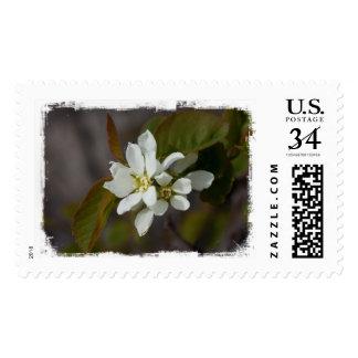Flor blanca con la hormiga franqueo