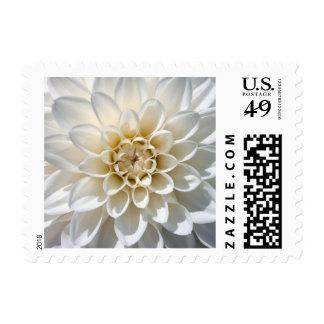 Flor blanca de la dalia timbres postales
