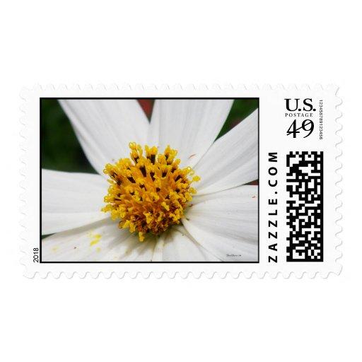 Flor blanca de la gloria del franqueo