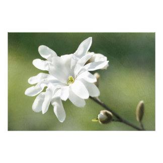Flor blanca de la magnolia fotografía