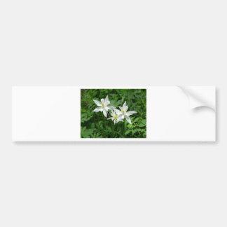 flor blanca de la montaña pegatina para auto