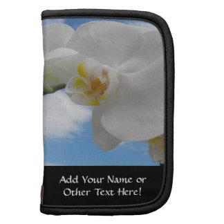 Flor blanca de la orquídea contra el cielo azul co organizadores