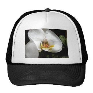 Flor blanca de la orquídea gorros bordados