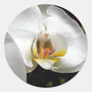 Flor blanca de la orquídea pegatina redonda