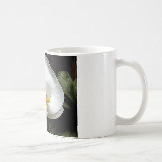Flor blanca de la orquídea taza de café