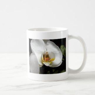 Flor blanca de la orquídea tazas de café