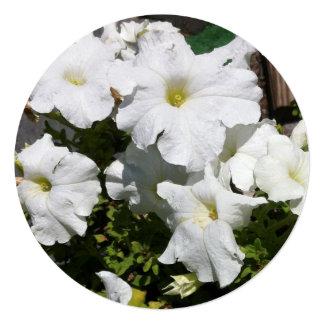 """Flor blanca de la petunia invitación 5.25"""" x 5.25"""""""