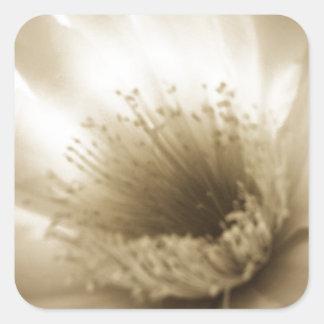 Flor blanca de la sepia pegatina cuadrada