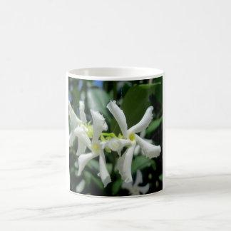 Flor blanca de los tubos del jazmín taza mágica