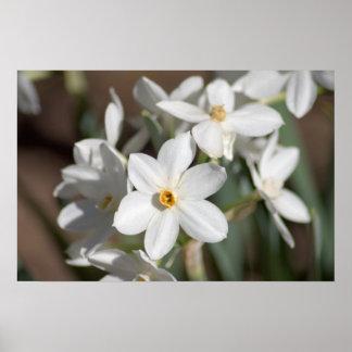Flor blanca de papel de Ziva Póster
