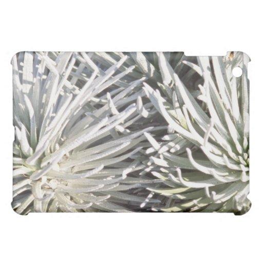 flor blanca de Silversword, flores de Hawaii