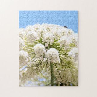 Flor blanca del cordón de la reina Anne contra el  Rompecabeza Con Fotos