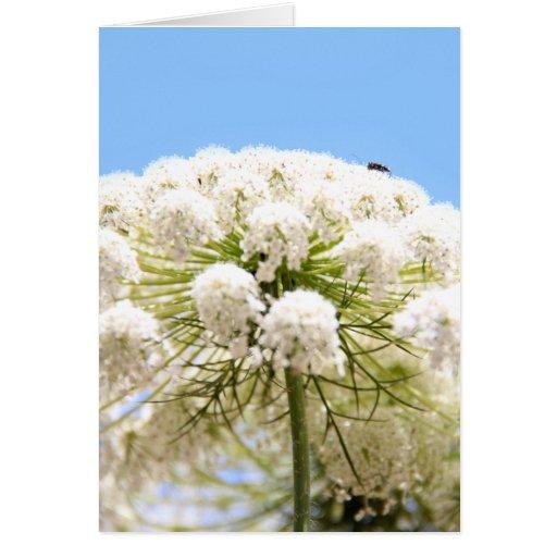 Flor blanca del cordón de la reina Anne contra el  Tarjeta De Felicitación