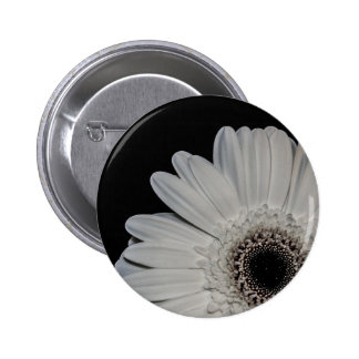 Flor blanca del Gerbera Pin