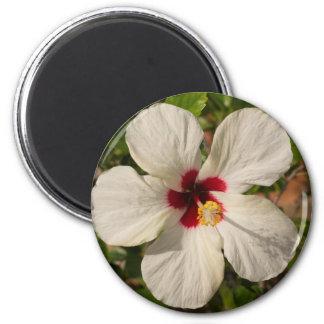 Flor blanca del hibisco de la malva color de rosa imán redondo 5 cm
