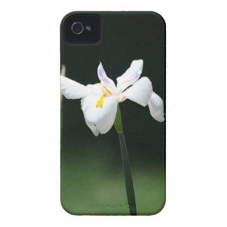 Flor blanca del iris Case-Mate iPhone 4 cobertura