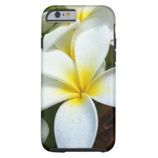 Flor blanca del Plumeria de Hawaii Funda Resistente iPhone 6
