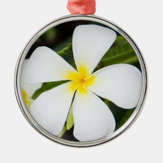 Flor blanca del Plumeria - plantilla floral del Adorno Redondo Plateado