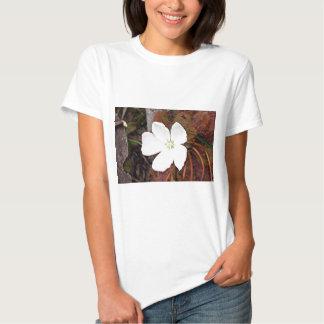 Flor blanca del sundew en la floración camisas