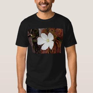 Flor blanca del sundew en la floración remera