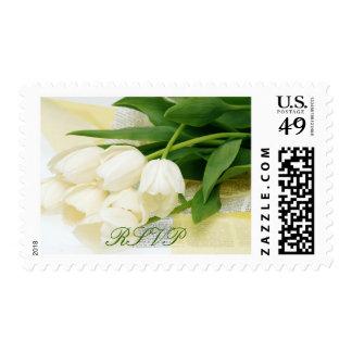 Flor blanca del tulipán franqueo