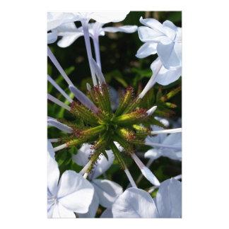 "Flor blanca folleto 5.5"" x 8.5"""