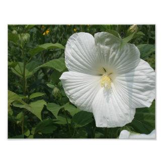 flor blanca fotografía