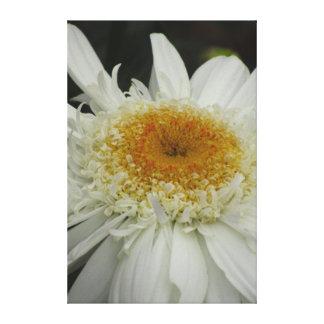 Flor blanca hermosa impresión en lienzo