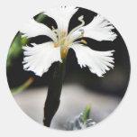 Flor blanca hermosa pegatinas redondas