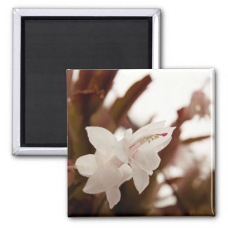 Flor blanca imán cuadrado
