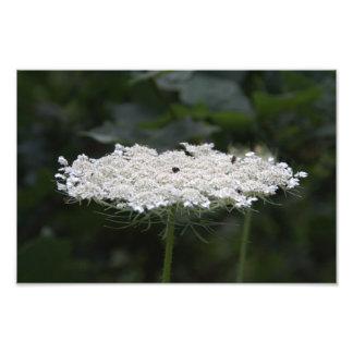 Flor blanca impresion fotografica