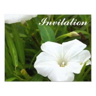 Flor blanca pura comunicados personales