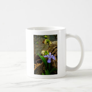 Flor blanca púrpura azul con cresta del iris enano taza
